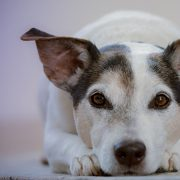 gedragsproblemen hond