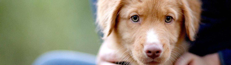 Honden gedragspraktijk en gedragtherapie de hondentolk