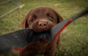 Hondengedragspraktijk