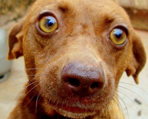 Honden gedragspraktijk en gedragtherapie