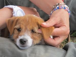 Gedragstherapie voor honden Tellington TTouch