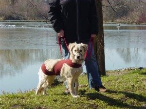 gedragstherapie-honden