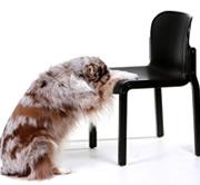 hondenschool limburgfuncursus